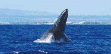 ★冬限定★クジラと出会う!